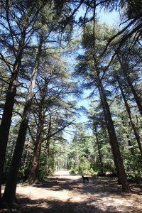 Camping Le Luberon : Forêt Des Cèdres