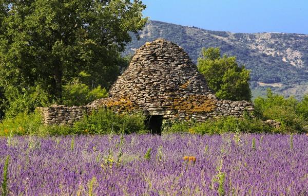 Camping Le Luberon : Plateau Des Claparedes Lavander