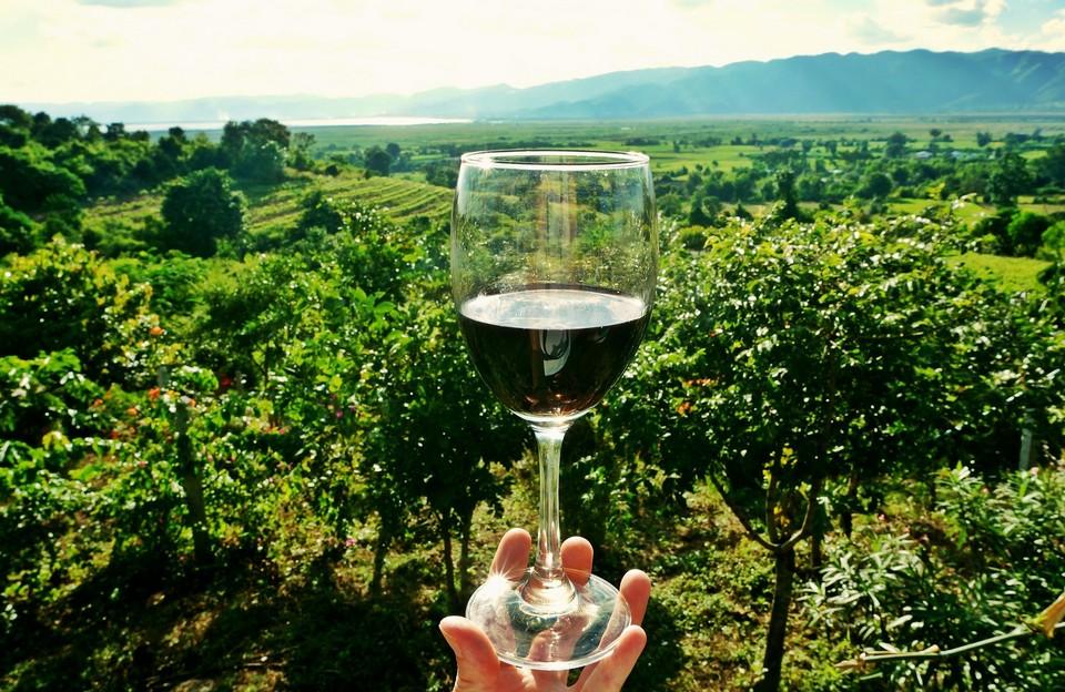 Camping Le Luberon : Wine Tasting